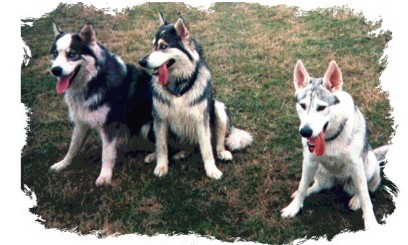 cash, sky and echo