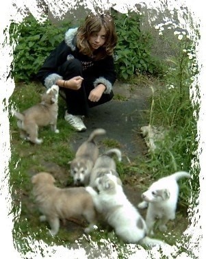 aimee with a litter of pups