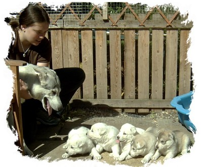 alison with echo pups