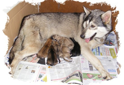 pagan and newborn pups