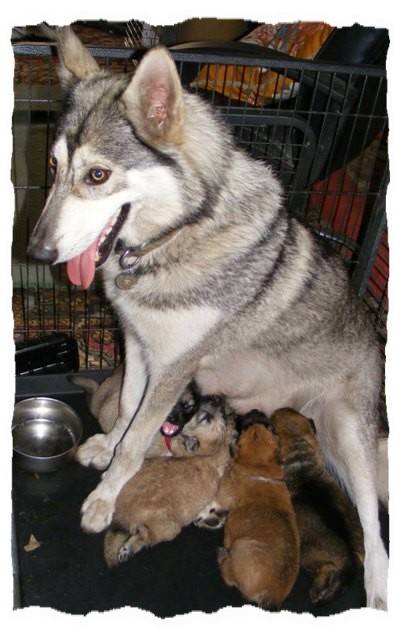 pagan and pups