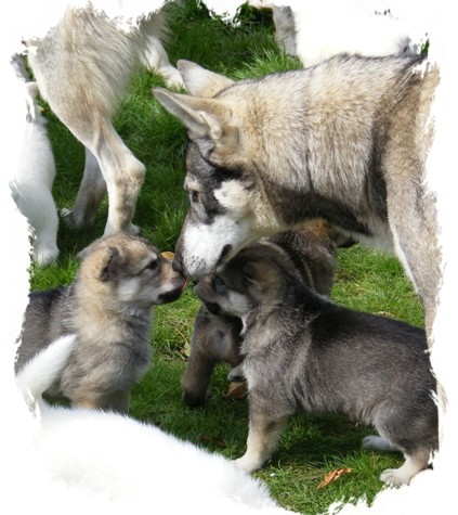pagans pups meet the pack