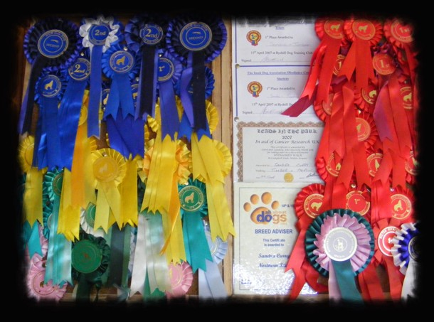 rosettes and certificates