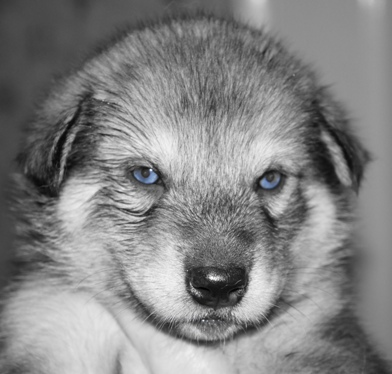 tundra girl blue eyes